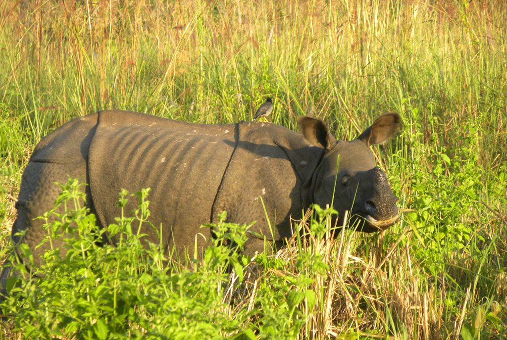 bardiya-national-park-jungle-safari