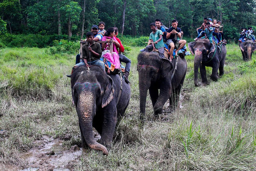 bardiya-national-park-jungle-safari1