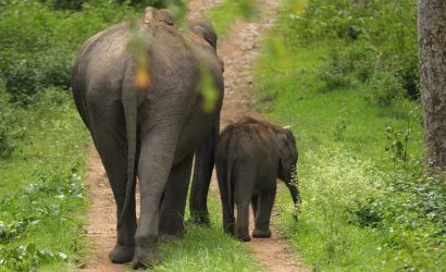 bardiya national park jungle safari