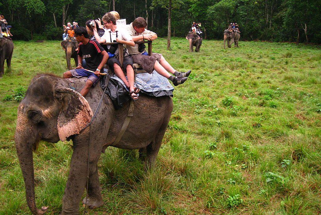 chitwan-national-park-jungle-safari