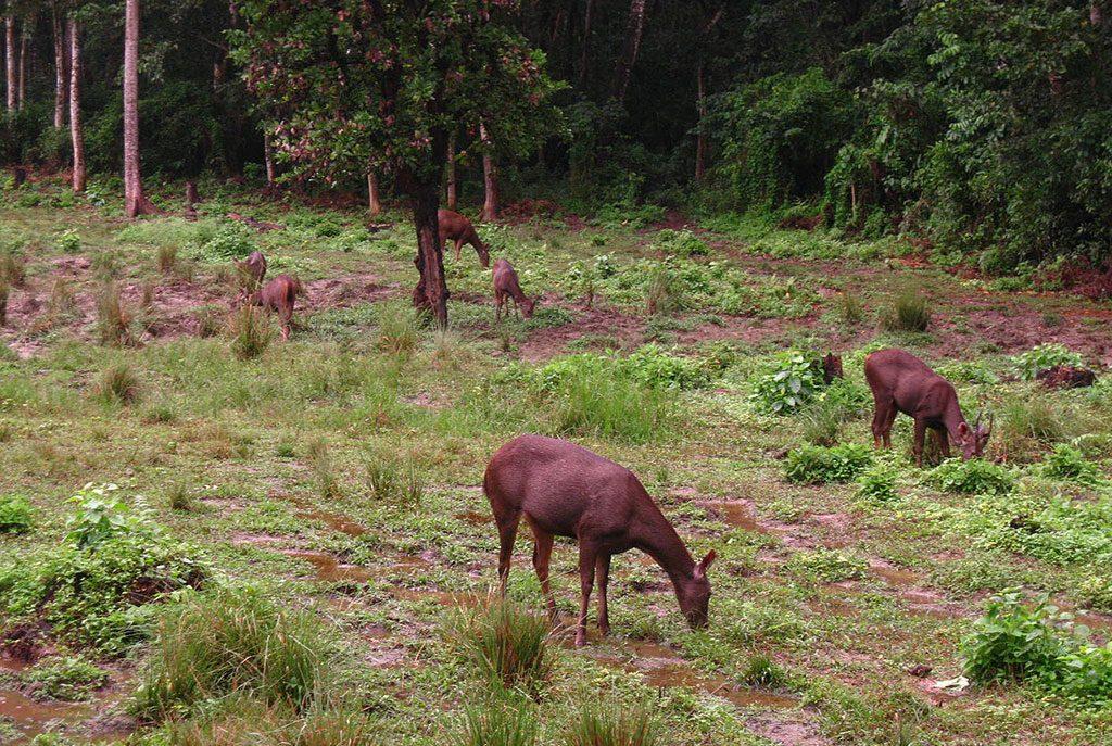 chitwan-national-park-jungle-safari1