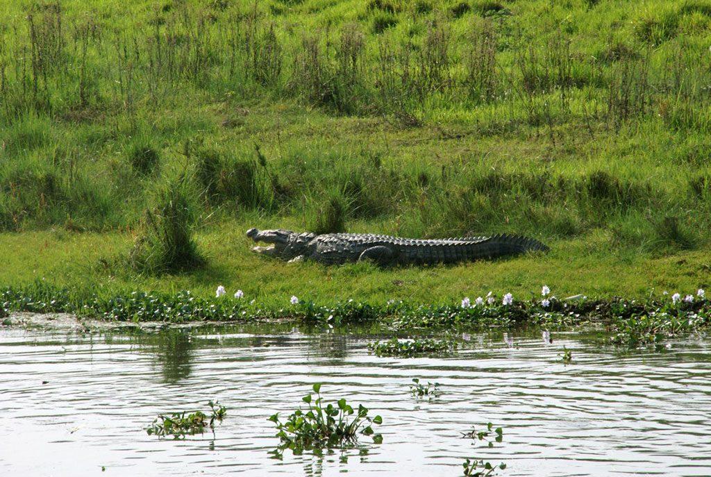 chitwan-national-park-jungle-safari4