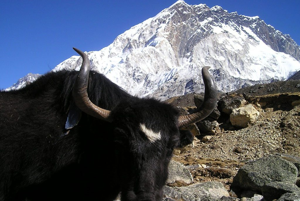 renjo-pass-everest-base-camp-trekking5