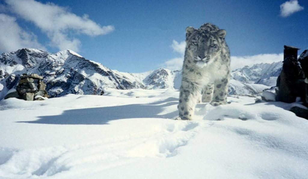 What animals live on Mount Everest